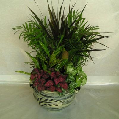 Arrangment Plant F6