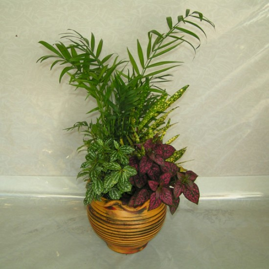 Collection Plants F9